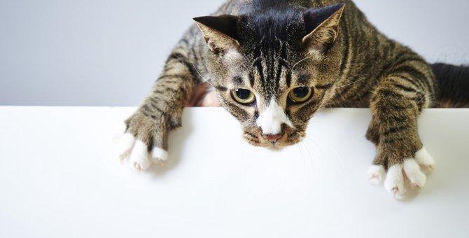 猫の爪とぎを防止する方法
