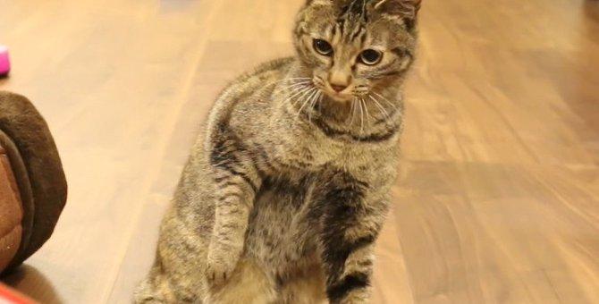 怖いけどパンチ!一生懸命猫パンチをする猫さん