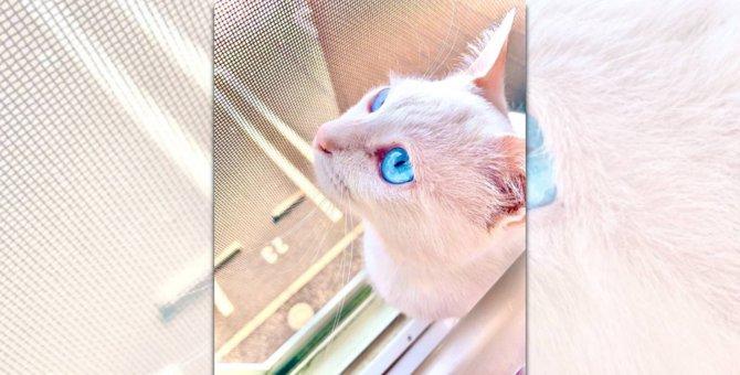 【話題】まるで宝石!美しすぎる瞳を持つ猫さん