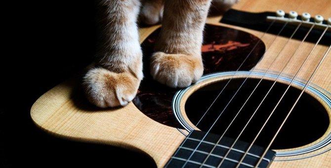 J-POPから童謡まで!猫がテーマのおすすめソング5選