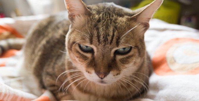猫が『大嫌いな人』にする行動や仕草5つ
