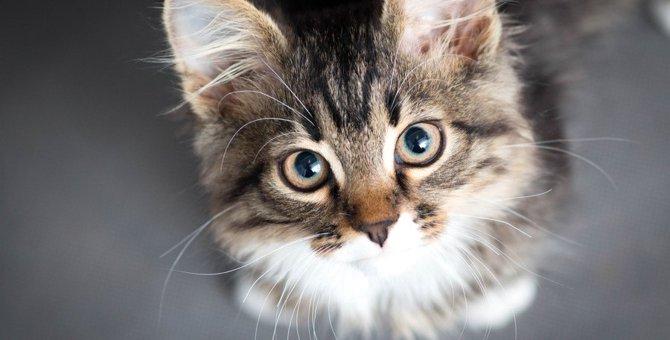 猫の気持ちがわからない時は仕草でわかる!心理を知ってもっと仲良くなろう