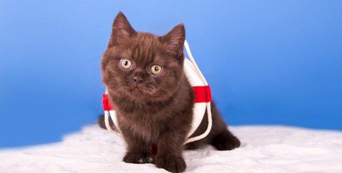 泳げる猫っているの?水が好きな猫種8選