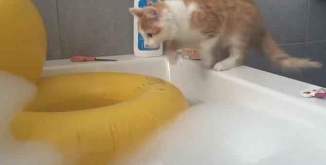 なぜか大丈夫だと思ったニャンコ、豪快にお風呂へ飛び込む