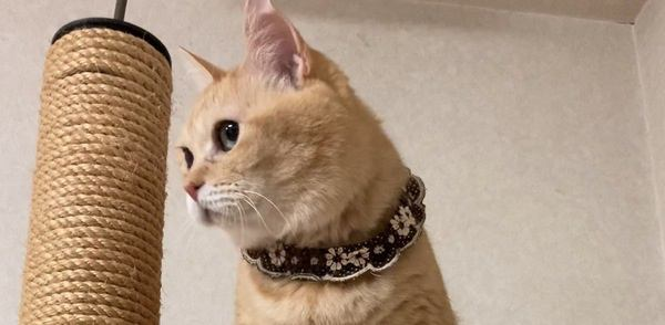 猫が高いところから降りられなくなる4つの理由と予防策