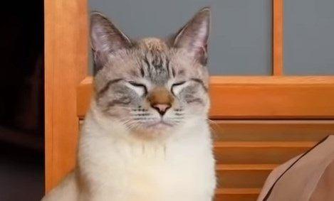 もしや今のは…?!猫の愛の証『ゆっくりまばたき』をしたのか検証