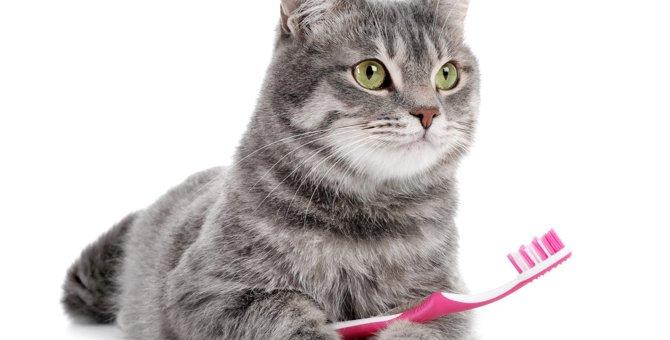 猫の『アンチエイジング』で試したい5つの方法