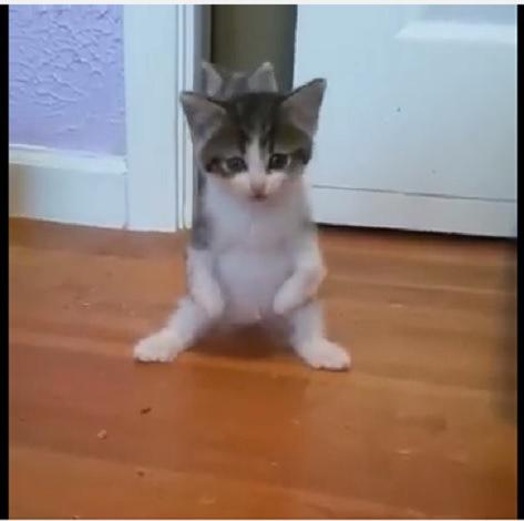 前足に障害を持って生まれた子猫は2本足で起用に立ち上がった!