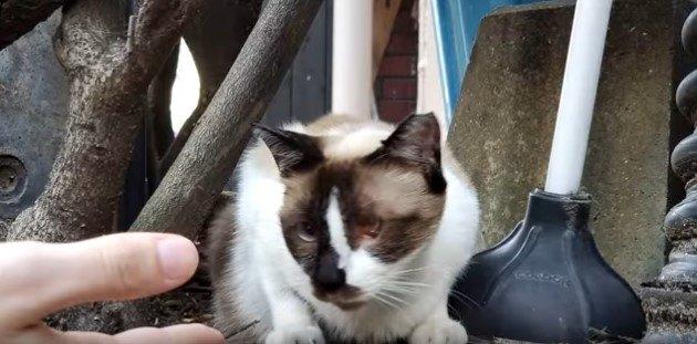 猫3匹と暮らす夫婦が片目のノラ猫に遭遇…保護を試みるも?(前編)