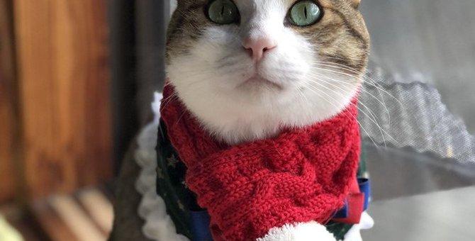 猫が『冬』に見せる行動の変化5つ