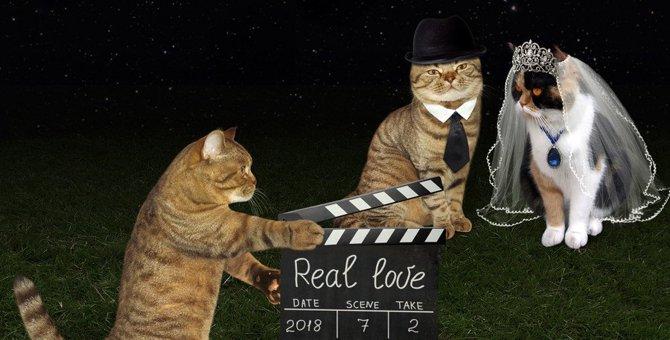 キアヌ・リーブスが猫の声優?映画「キアヌ」について