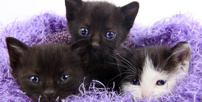 青い目の猫はシャイ!?目の色で分かる猫の性格診断!