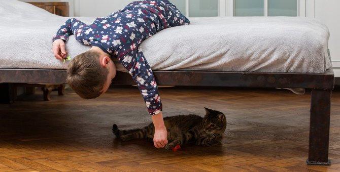 猫に操られてる…!?猫から学べる心理テクニック5つ