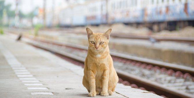 猫と電車に乗るために知っておきたい料金と注意点