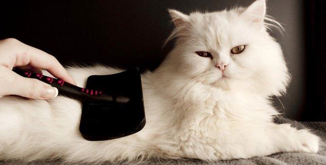 猫がブラッシングを嫌がる際のおすすめの方法4選