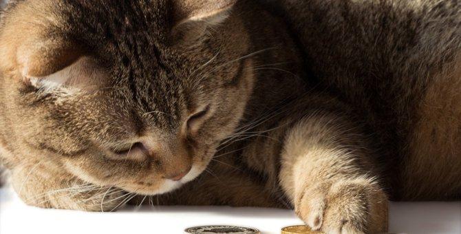 猫の飼い主が絶対買っちゃダメなアイテム5選!猫の危険なトラブルを招くことも?