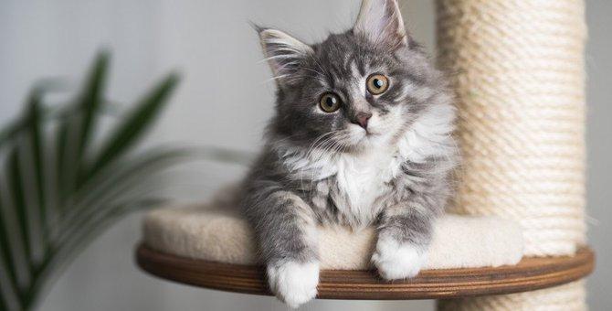 『現代の猫のライフスタイル』とは?愛猫にとって理想の暮らしを実現するための4箇条!