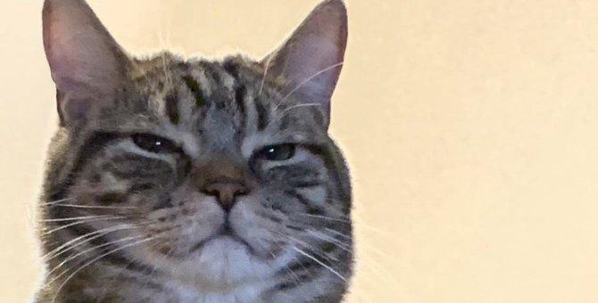 『不幸な猫』を減らしたい…今すぐできる心構えや有事のときの行動5選
