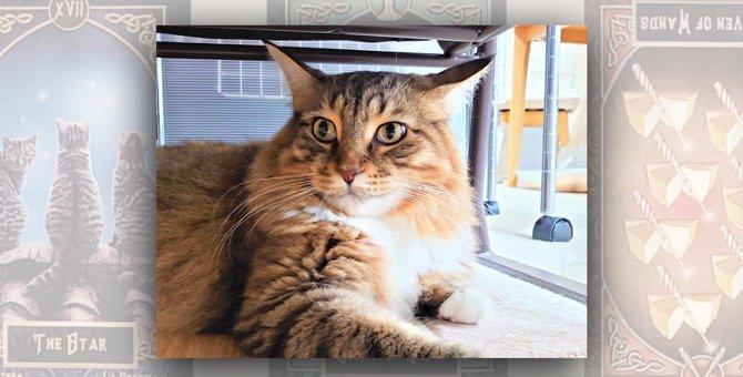 いつも2階には最後に上がる愛猫。その驚きの理由を聞いてみました|LAYLAのペットリーディング