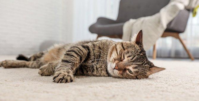猫が『運動不足』になるとみせるサイン5つと対策