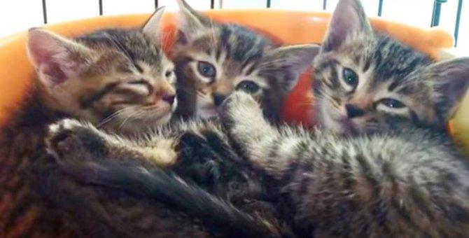 アライグマに狙われる子猫たち…苦難を乗り越え新しい未来へ!