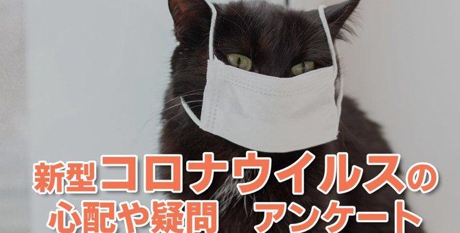 【緊急アンケート】新型コロナウイルスに関する心配や疑問