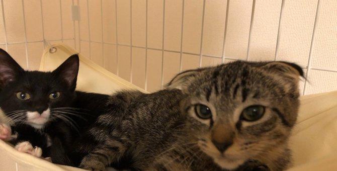 保護猫2匹と運命的な出会い♡黒白タキシードの「半蔵」と耳折れの「那由多」との暮らし