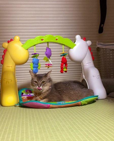 猫が赤ちゃんに優しいのはなぜ?実例もご紹介