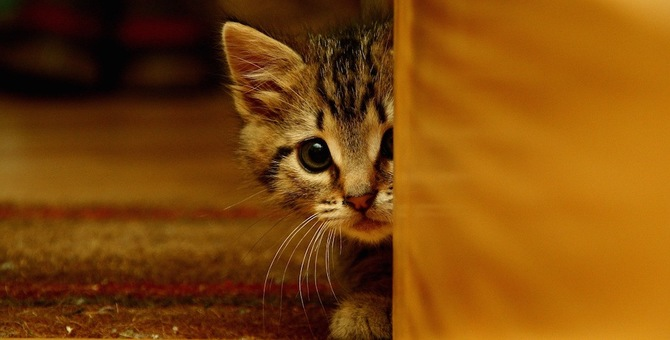 猫がインターホンを怖がる3つの理由