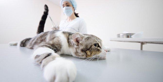 季節の変わり目に注意!猫の体に起こりやすい5つの不調と予防策