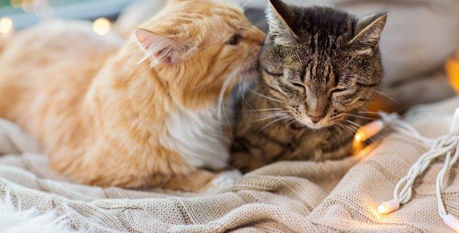 肉球が冷たい?猫が『冷え性』になったときの症状5つ