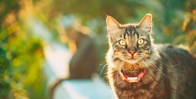 猫の『発情期』に見られる行動3つ!オスとメスで異なる発情行動や対処法