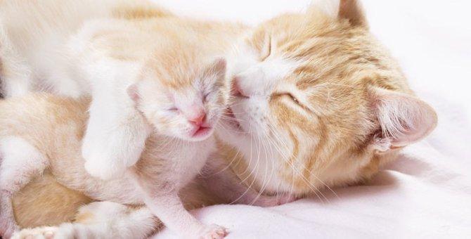 猫が妊娠した時の見分け方と注意点
