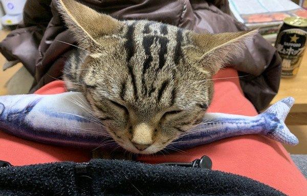 猫が枕にしがちなもの5つ