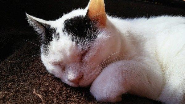 猫が『腕枕』を要求してくる心理3つ