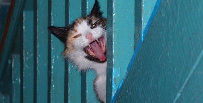『猫又』と『化け猫』は違う!猫が化けると思われる理由5つ