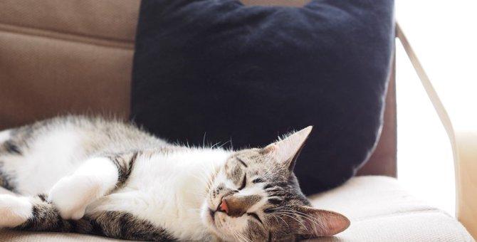 もたれてリラックス♪猫型クッション6選