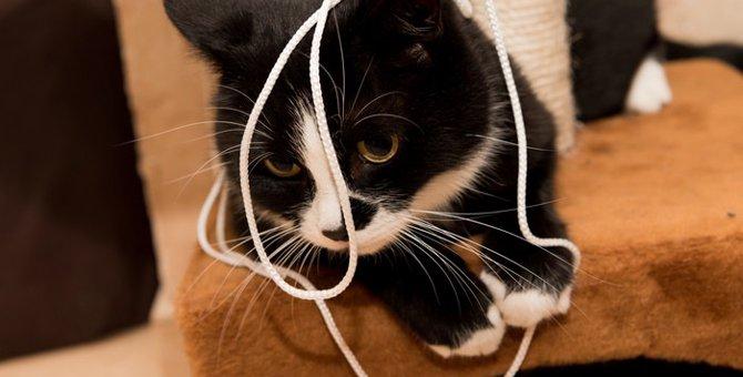 猫が輪ゴムを誤飲した時の対処法や普段から注意する事