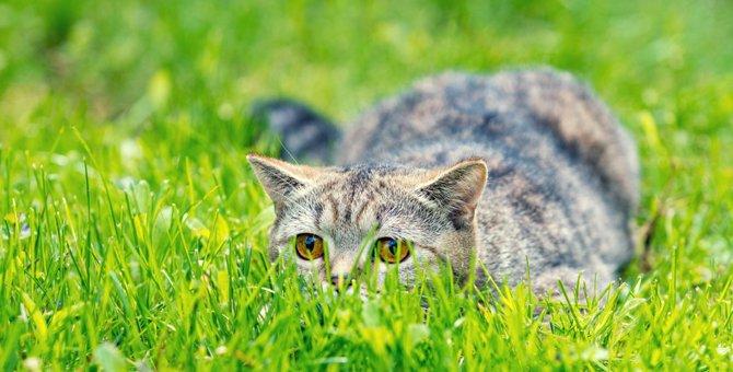 「だるまさんが転んニャ!」飼い主さんと遊ぶ猫達5連発!