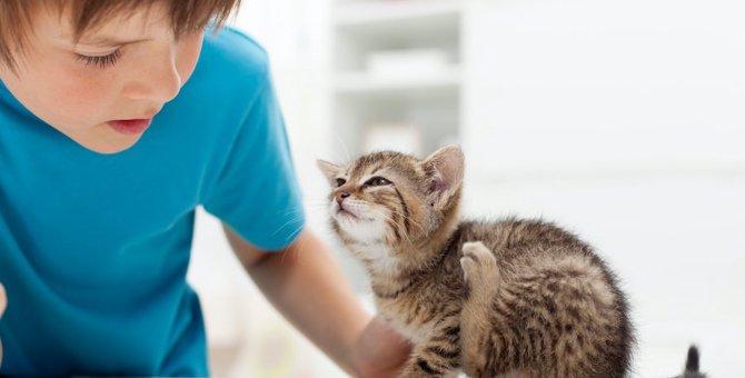 病気?猫のフケが出る原因と対策5つ