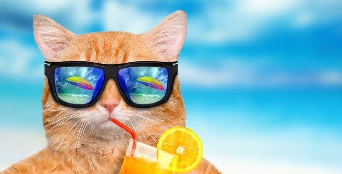 捨て猫から一転、SNSでビーチキャットとして超人気者に!