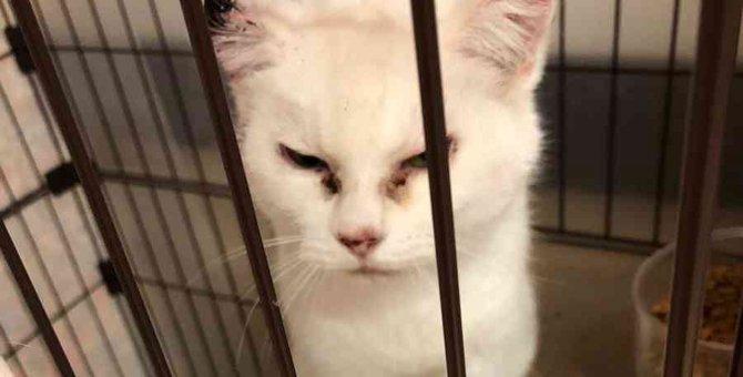 大怪我を負った白猫姉妹…それぞれに幸せへの一歩を歩む!