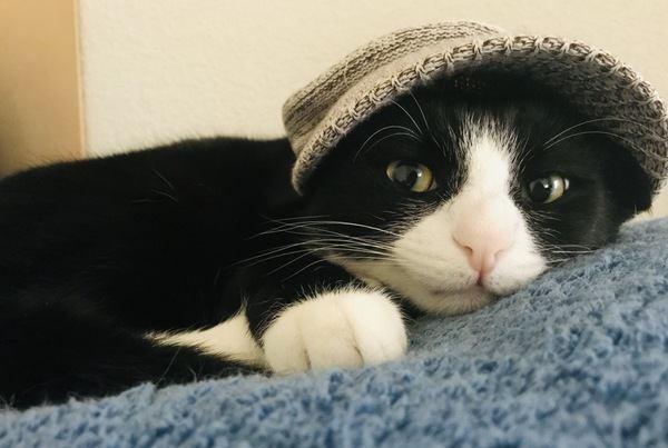猫と暮らして初めてわかる『理想と現実』5選