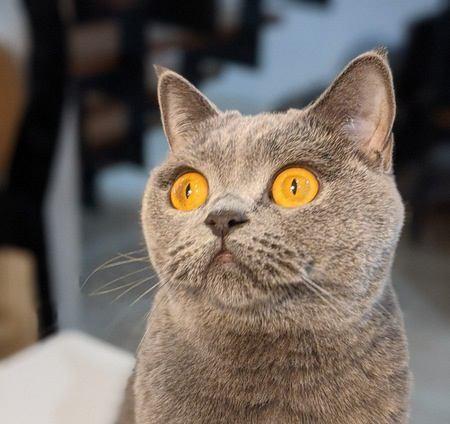 猫に『名前を覚えてもらう』ための5つの方法