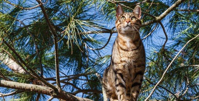 猫が見せる謎の行動5選