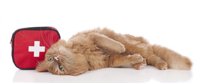 愛猫の緊急時は?飼い主はどう対応したら良いのか、まとめました。