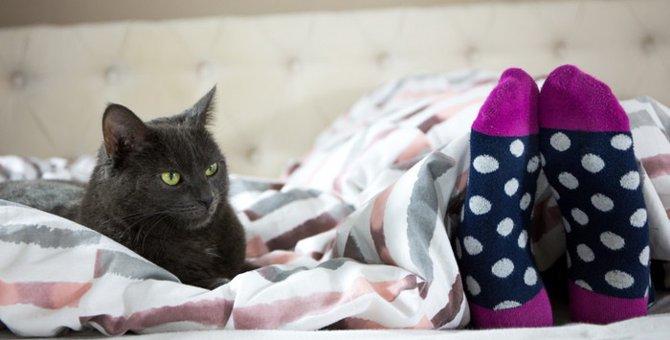 ニオイが好きなの?猫が靴下に反応する理由