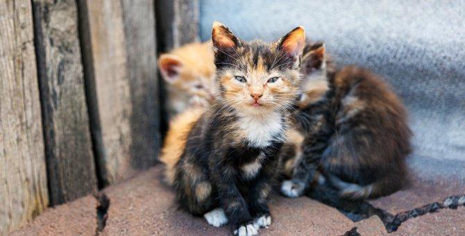 野良猫を保護する時に絶対やってはいけないNG行為5選