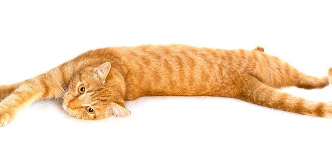猫がすぐ横たわる5つの理由