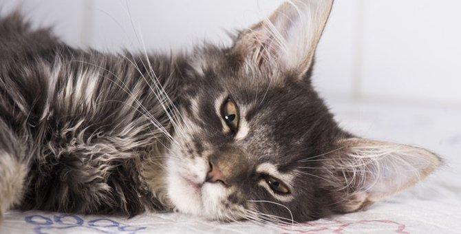猫が嘔吐する理由とその処理の仕方